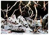 Rückwandfolie 150cm x 60 cm Rückwandposter für Aquarien