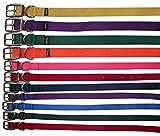 Amesbichler Hundehalsband Prism Choice aus Nylon 1,9 cm breit| Halsband für Hunde | Halsband Hund