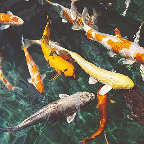 Ornigold Mehlwürmer getrocknet 500g Premiumqualität Insekten Wildvogelfutter – Ganzjahresfutter für Wildvögel, Hühner, Hamster, Reptilien und Koi - 3