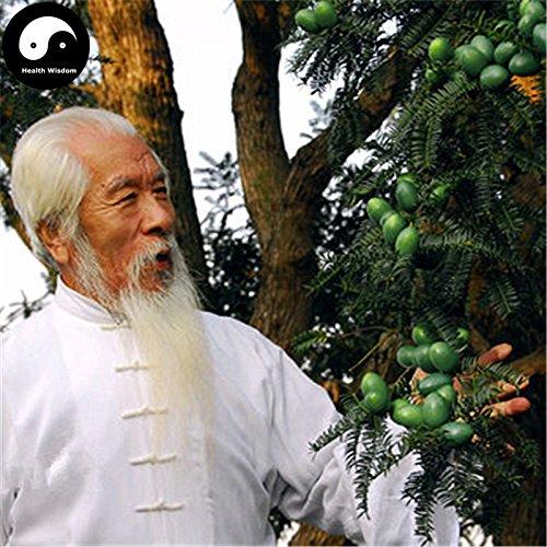 Kaufen Echt Torreya Grandis merrillii Baumsamen 24X Pflanze Chinese Taxaceae wachsen Nut Tree Xiang Fei