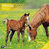 Pferde 2020, Wandkalender / Broschürenkalender im Hochformat (aufgeklappt 30x60 cm) - Geschenk-Kalender mit Monatskalendarium zum Eintragen