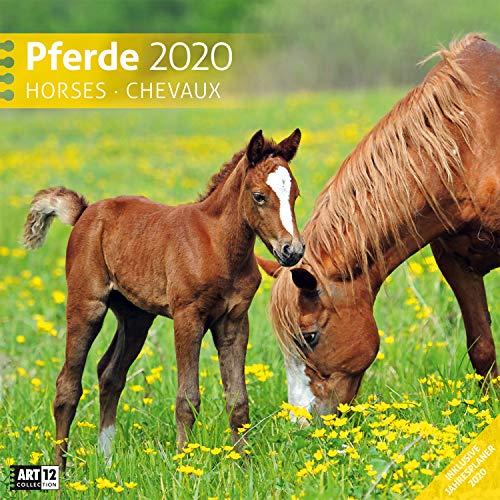 Pferde 2020 Broschürenkalender