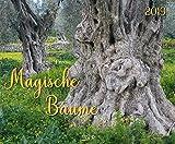 Magische Bäume 2019: Großer Wandkalender. Foto-Kunstkalender mit prächtigen Bäumen. PhotoArt Kalender im Querformat. 55 x 45,5 cm