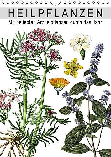 Heilpflanzen (Wandkalender 2017 DIN A4 hoch): Mit beliebten Arzneipflanzen durch das Jahr (Monatskalender, 14 Seiten ) (CALVENDO Gesundheit)