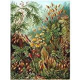 Bumblebeaver Nature Art ERNST Haeckel SEA Plant Biology