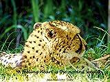 Artland Qualitätsbilder I Wandtattoo Wandsticker Wandaufkleber 60 x 45 cm Tiere Wildtiere Raubkatze Foto Gelb D0NK Leo 1 + Lyrik