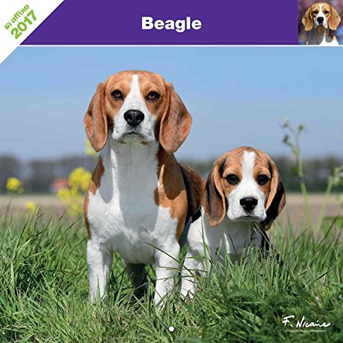 KALENDER BEAGLE 2017 - AFFIXE (Beagle-kalender)