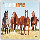 Quarter Horses 2016 - 18-Monatskalender: Original BrownTrout-Kalender [Mehrsprachig] [Kalender] (Wall-Kalender)