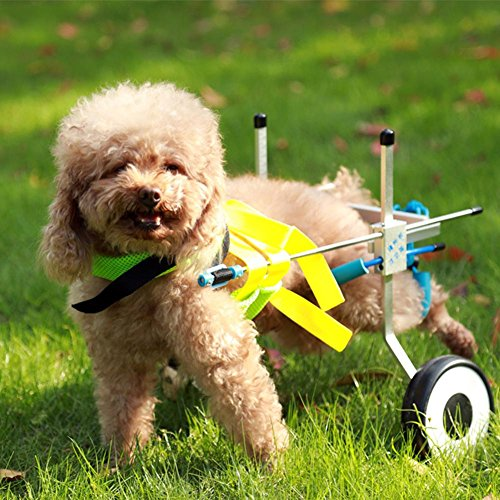 61eQbg0z1%2BL - Teabelle - Silla de Ruedas Ajustable para Perro, para rehabilitación de piernas para Perros pequeños con minusvalía, Perros y Cachorros (2 Ruedas)