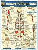 Muscular Origins & Insertions (Quickstudy: Academic)