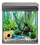 Tetra AquaArt Discovery Line Aquarium-Komplett-Set 30 Liter anthrazit (inklusive EasyCrystal Innenfilter, ideal für die Haltung von Krebsen und Garnelen)
