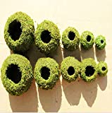 New Succulent Flowerpot Moss Home Furnishing Pots Moss Vase Micro Landscape Gardening Moss Ball Pot DIY Material Home Decoration 9CM