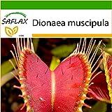 SAFLAX - Venus atrapamoscas - 10 semillas - Con sustrato - Dionaea muscipula