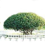 SL&ZX Konservierungsmittel holzzaun,Zaun Zaun Garten Blume Garten Zaun Rasen Zaun Blume Pool Zaun Weiße Holz-Zaun-Weiß 60x35x20cm(24x14x8inch)