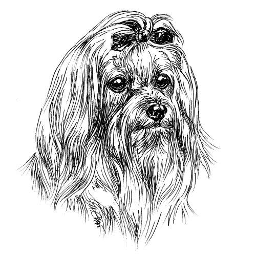 Dogge Tür Hund (Schecker-Warnschilder Hier wache ich 12x14cm Malteser, stehend)