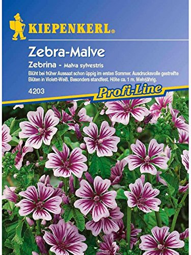 Malva sylvestris Zebra-Malve Zebrina