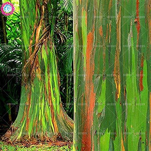 Shopmeeko 100 plantes de concombre Cucumis Sativus plantes Cuke plantes de légumes verts fournitures de jardin Livraison gratuite: gris foncé