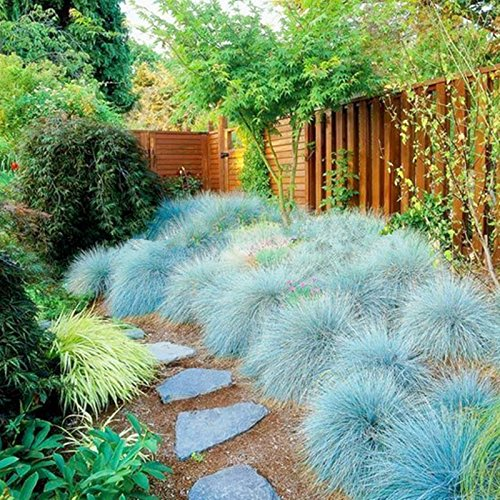 Qualität Evergreen Rasen Bermuda Gras-Samen resistent gegen Trampeln Stadium Villa DIY Hausgarten Pflanze 50g / Packung