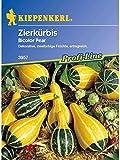 Cucurbita pepo Zierkürbis Bicolor Pear gelbgrüne Birnen