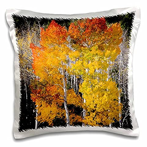 Danita Delimont - Scott T. Smith - Trees - Utah, USA, Aspen trees in autumn. Fish Lake Basin. Fishlake NF. - 16x16 inch Pillow Case (pc_191931_1)