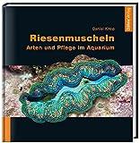 Riesenmuscheln: Arten und Pflege im Aquarium