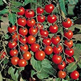 Best Tomato Plants - Go Green Tomato Cherry Review