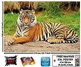 Papel pintado fotográfico que muestra un tigre - fotomural de un tigre majestuoso ideal para el salón by GREAT ART (210 x 140 cm)