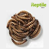 Giant Mealworms 25-40mm - Approx 250g Bag
