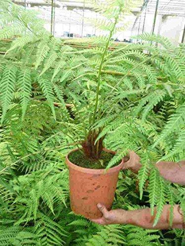 Unterpflanzung Unterpflanzung für