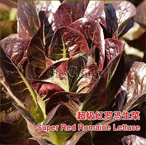 Super rouge laitue romaine semences * laitue romaine * organique non-OGM * Lactuca Sativa * * Seed salade de légumes