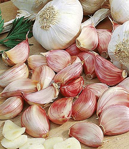 inkeme giardino - aglio biologico semi pianta aglio specialità aglio semi di ortaggi ortaggi semi perenni resistenti per giardino balcone/terrazzo