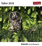 Postkartenkalender Eulen - Kalender 2018 - Harenberg-Verlag - mit 53 heraustrennbaren Postkarten - 16 cm x 17,5 cm