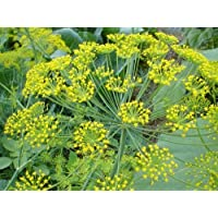 FES Quintessentials Flower Essences Services Dill 30ml Dosage by Natures Wisdom preisvergleich bei billige-tabletten.eu