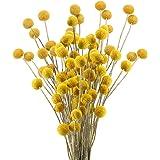 HUAESIN 30pcs Ramo de Flores Secas Decoracion Pequeñas Bolas de Craspedia Secas Amarilla Flor Seca Natural para Manualidades