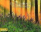 Deutschlands Wälder 2018: PhotoArt Wandkalender. Bildkalender von der Natur im Wald. Querformat: 44x34 cm