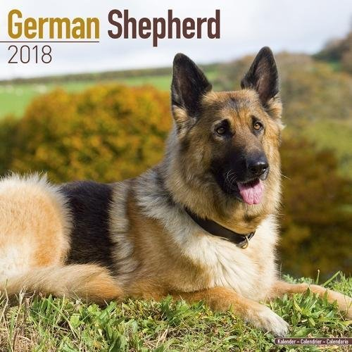 German Shepherd Calendar 2018 (Square)