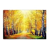 hdrjdrt La Luce del Sole brilla nei boschi di Acero Giallo Bianco Tronco Nero Foglie Caduta Terra Erba Tappetino da Bagno Morbido Assorbente Antiscivolo Resistente all'Usura