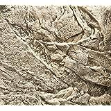 Juwel–Acuario decorativo fondo Cliff luz 600x 550