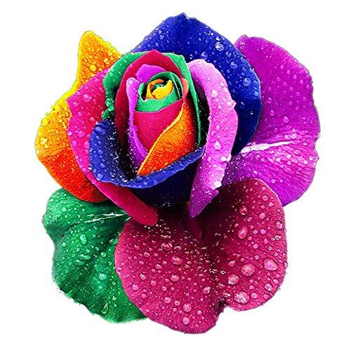 cravog-vivaces-belle-floraison-500-pcs-rose-graines-arc-en-ciel-couleurs