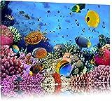 Bunte Fische über Korallenriff Format: 80x60 auf Leinwand, XXL riesige Bilder fertig gerahmt mit Keilrahmen, Kunstdruck auf Wandbild mit Rahmen, günstiger als Gemälde oder Ölbild, kein Poster oder Plakat