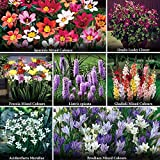 Complete Summer Flowering Bulb Collection - 300 Bulbs in 7 Varieties