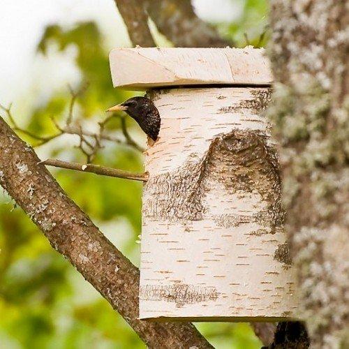 nest4nature Nistkasten aus Birkenholz 30 cm hoch - 4