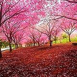 Shopmeeko 20 teile/beutel sakura brunnen weinende kirschbaum zwerg japanische blüten bonsai blume für diy hausgarten pflanze: 01