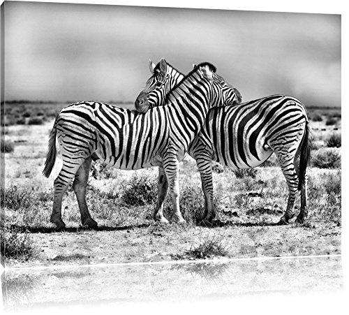Monocrome, Schmusende Zebras , Format: 120x80 auf Leinwand, XXL riesige Bilder fertig gerahmt mit...