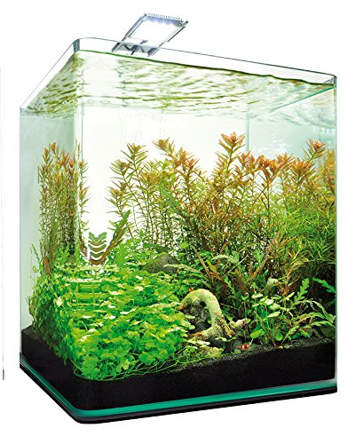 dennerle nano cube complete plus nano aquarium. Black Bedroom Furniture Sets. Home Design Ideas