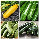 Zucchine - le migliori varieta per letcho - set di 4 varieta - 4 pacchetti di semi