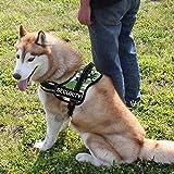 FidgetGear Reflektierendes Hundegeschirr mit Etikett für den Service Dog, gepolstert, Größe XL, 73,7–94 cm