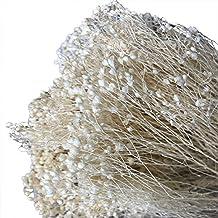 WDILO - Ramo de Flores secas Naturales para decoración de casa, jardín, casa,