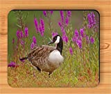 BIRD CANADA GOOSE IN FLOWERED MEADOW MOUSE PAD