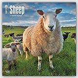 Sheep 2017 Square Wall Calendar